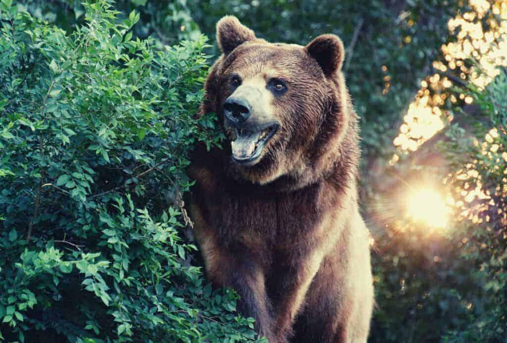 bear spray featimage