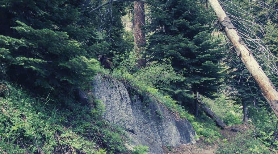 High Sierra 2