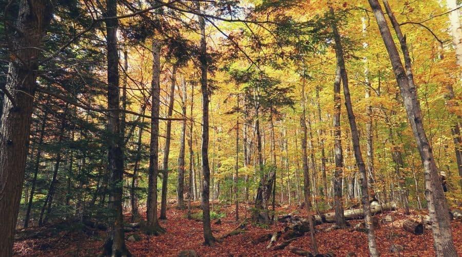 Arethusa Falls Trail Foliage
