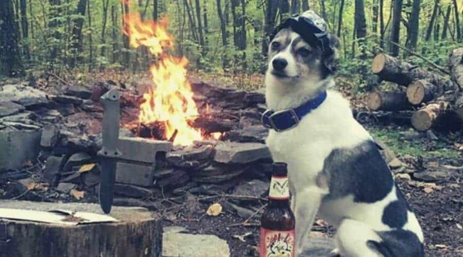 Dog watching over a campfire intext