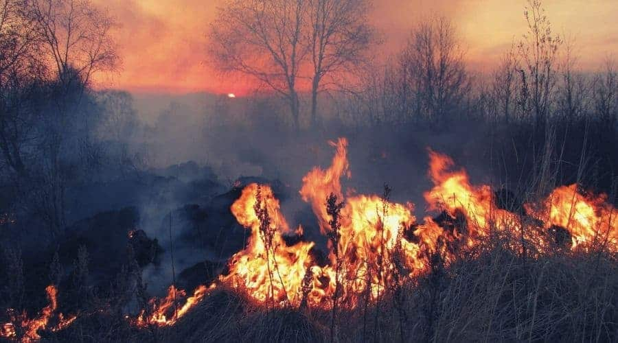 Forest fire raging out of control