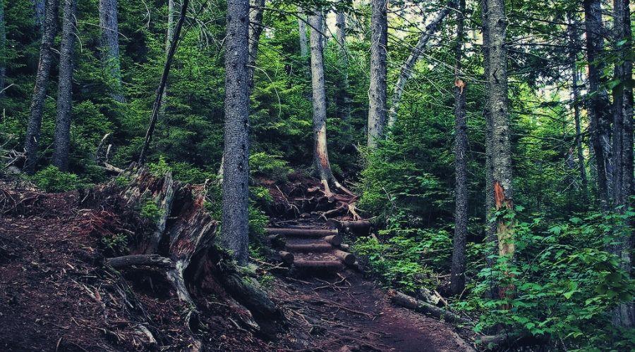 arethusa falls trail 2