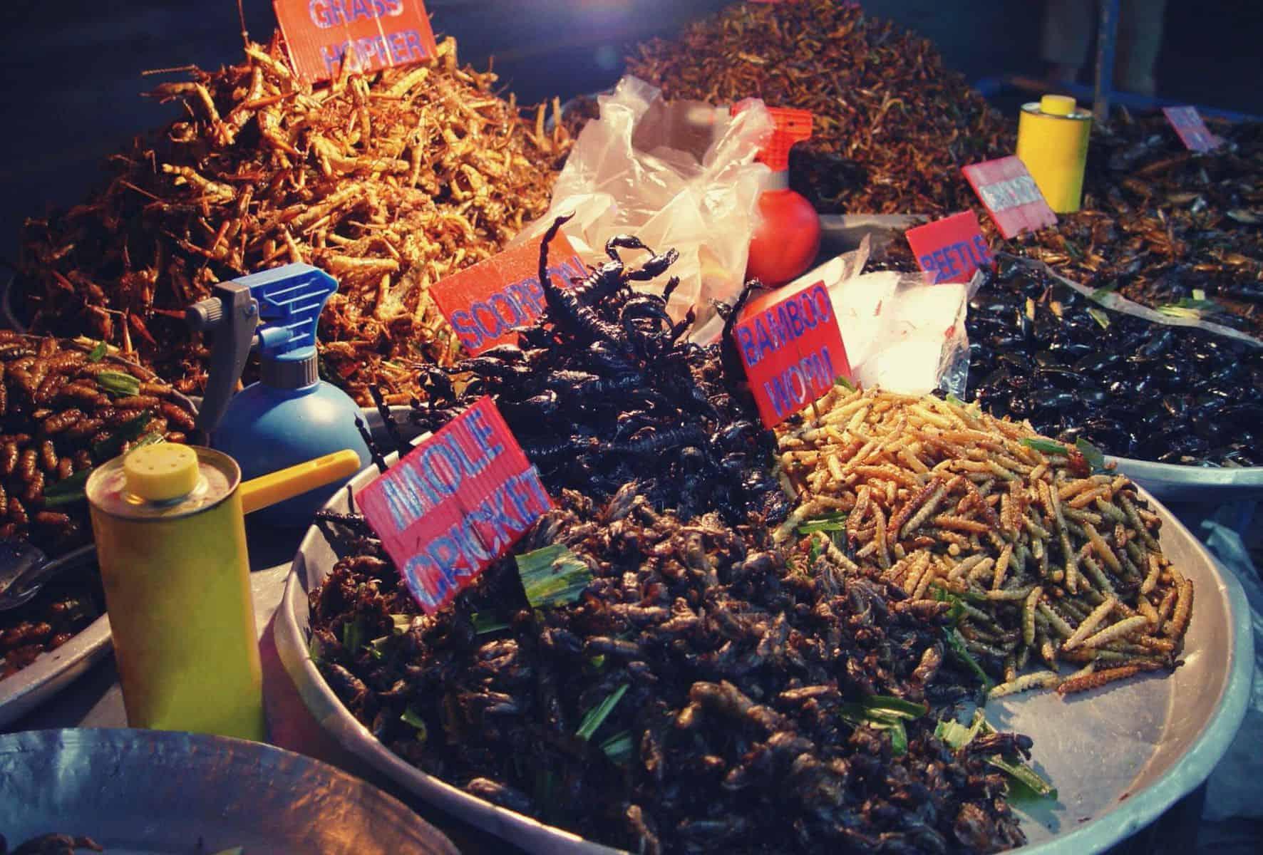 edible bugs featimage