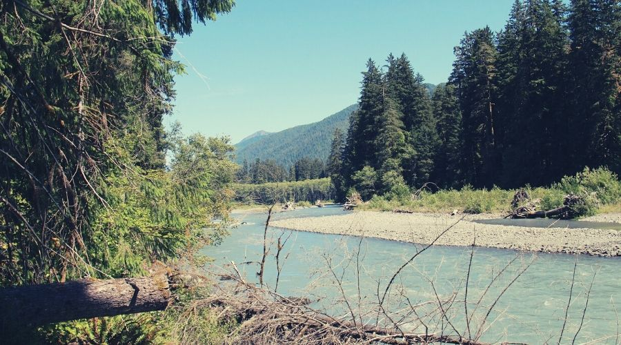 Hoh River Trail 1