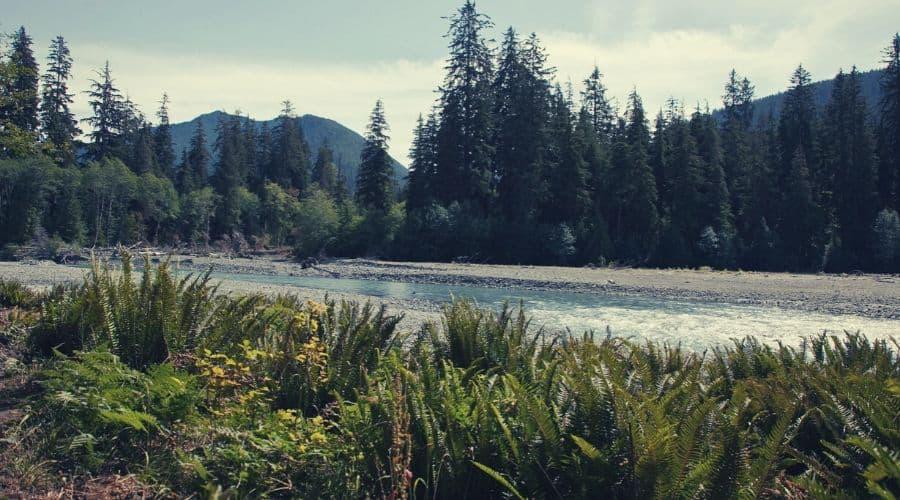 Hoh River Trail 2 intext
