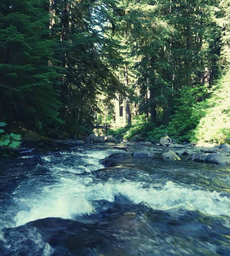 Hoh River Trail 5 Vertintext