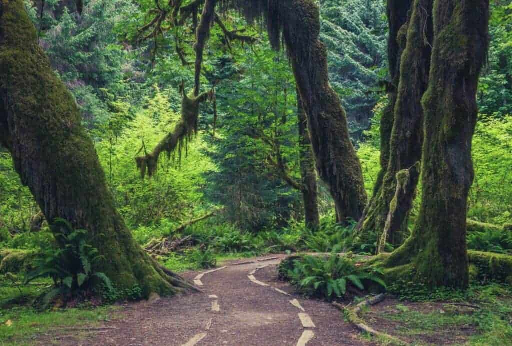 Hoh River Trail Guide featimage