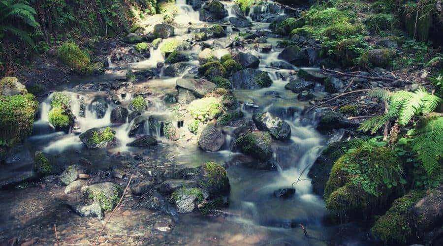 Waterfall Along Hoh River Trail