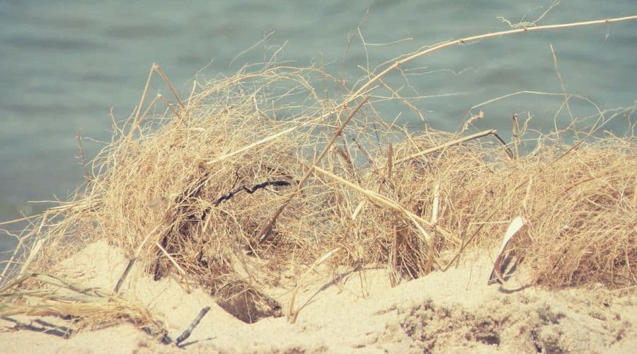 nordhouse dunes 6