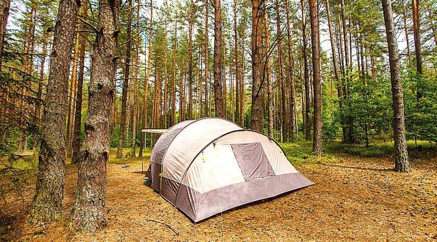 Tent for family camping in pine forest - In Text