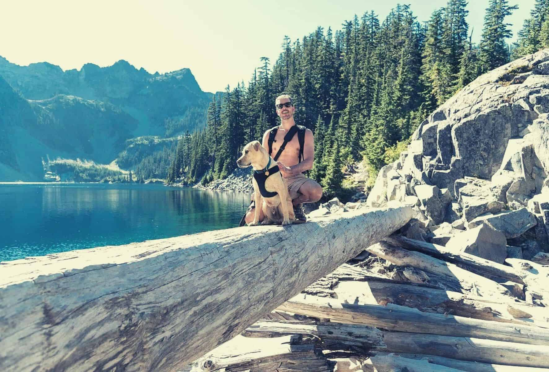 best dog harness for hiking featimage