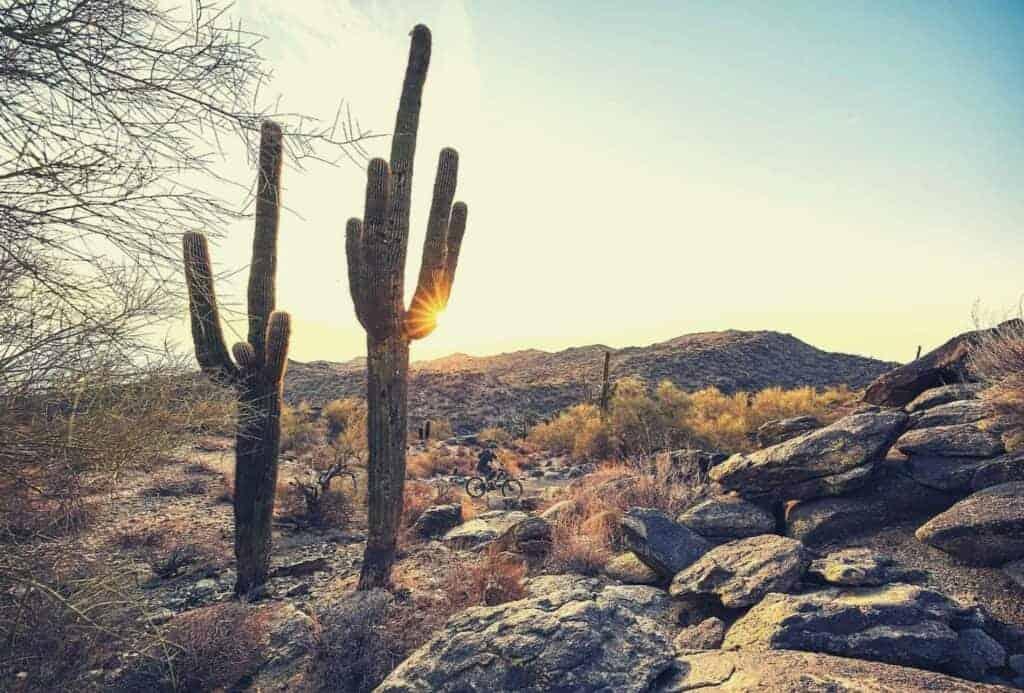 cactus on holbert trail arizona featimage
