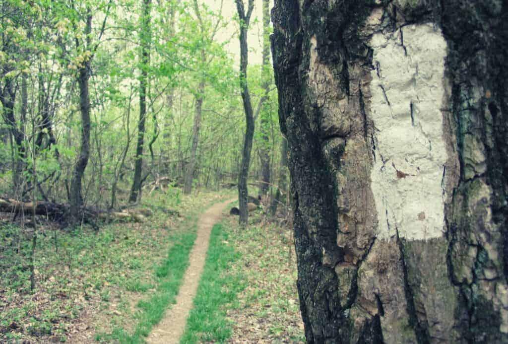 Trail Blaze & Trail Markers featimage