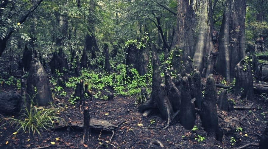Cypress-Slough-Big-Thicket-National-Preserve-Texas