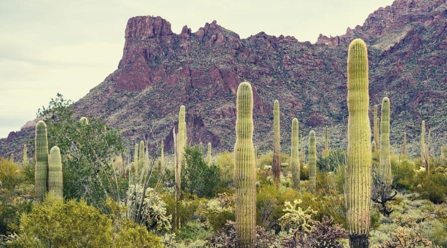 Organ Pipe Cactus National Park, Arizona