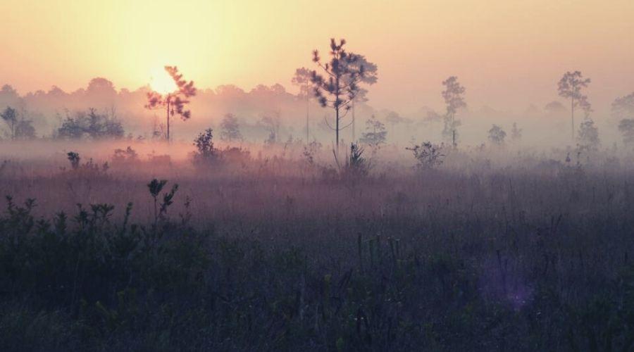Fontainebleau Nature Trail, Mississippi Sandhill Crane National Wildlife Refuge