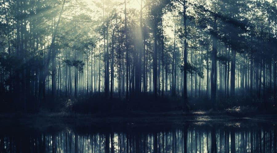 Tuxachanie Trail desoto national forest