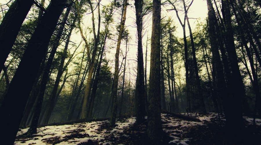 Zoar Trail, Paugussett State Forest