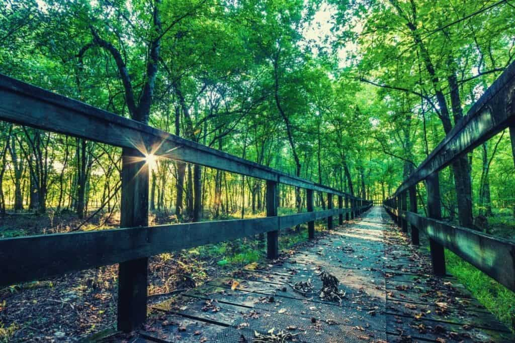 best hiking trails in mississippi - feat img