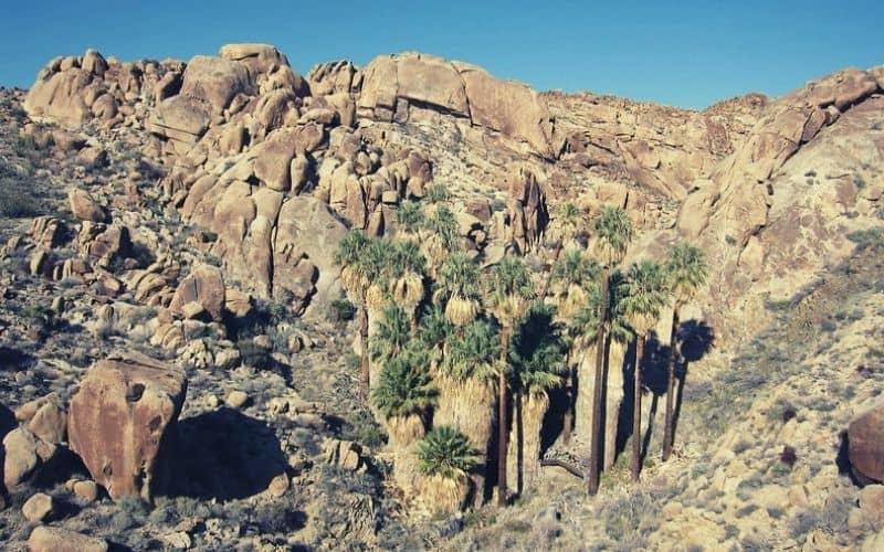 Munsen Canyon To Summit Spring Oasis
