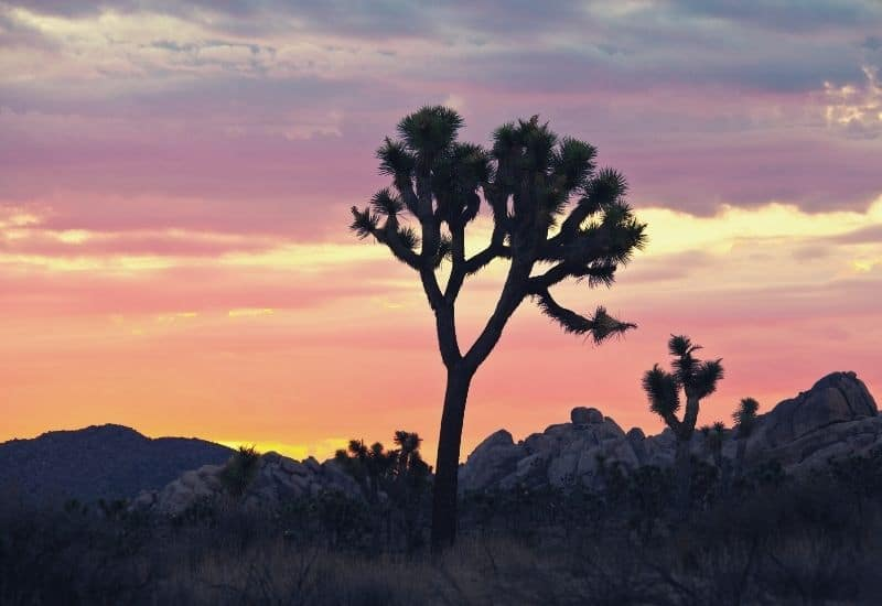 best hikes in joshua tree national park - featimg