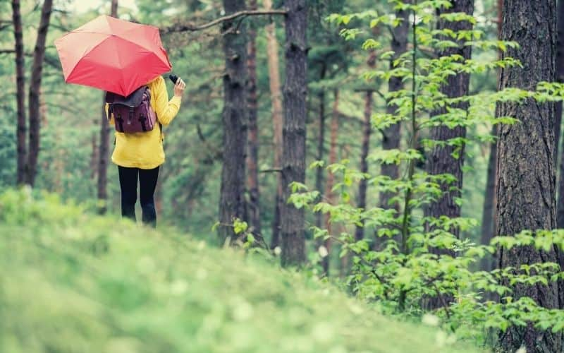 birdwatcher hiker in forest with umbrella