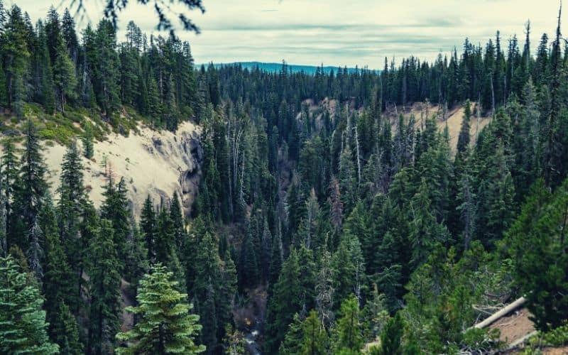 Annie Creek Trail