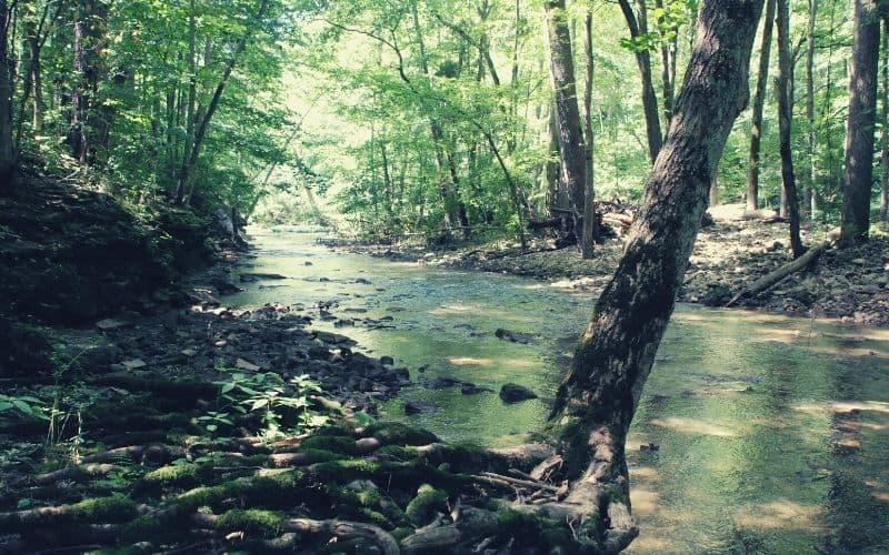 John L Rich Trail & North Rim Trail, John Bryan State Park