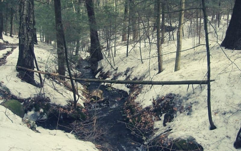 Mount Toby Trail, Mount Toby State Forest