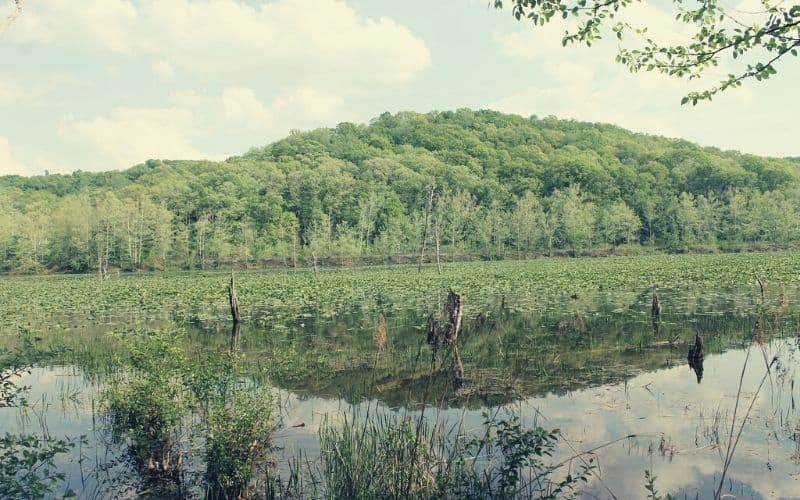 South Loop, Zaleski State Forest