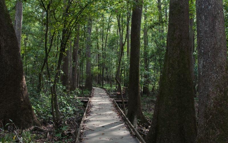 Boardwalk Trail Loop congaree