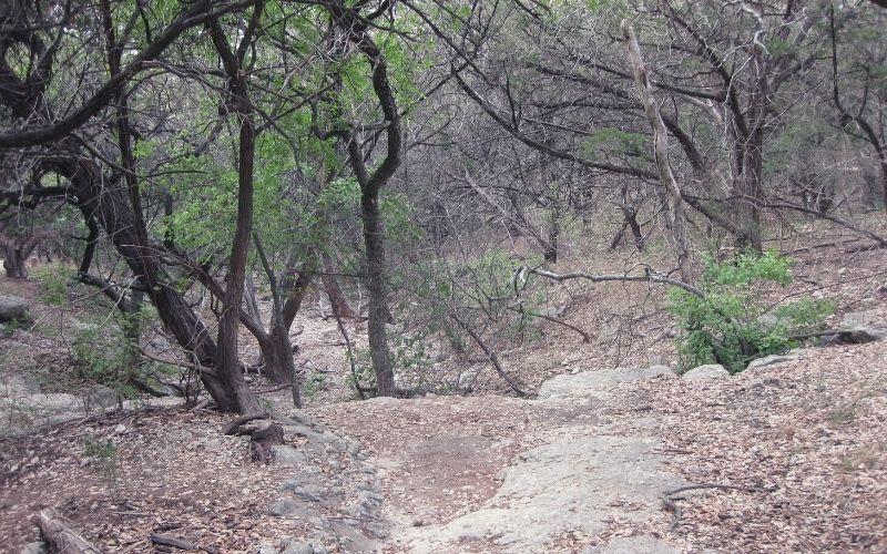 Forest Range Loop Trail, Friedrich Wilderness Park