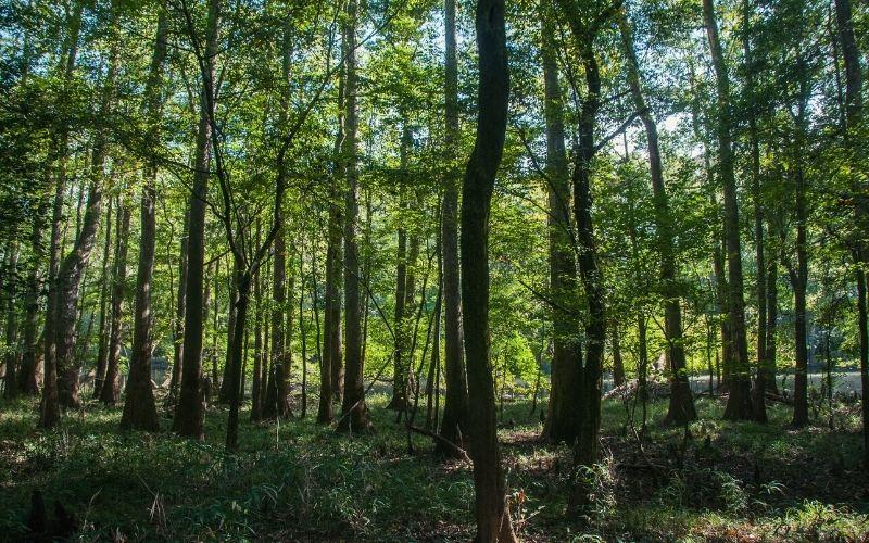 Oakridge Trail congaree